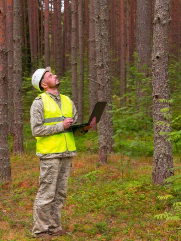 Инженер по лесопользованию и лесовосстановлению